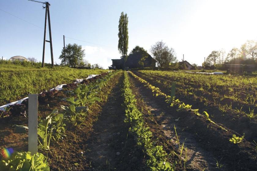 Solidarische Landwirtschaft, bio, öko, regional, Lebensmittel